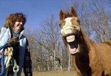 おれんじのうだうだ日記?時にはふんがふんが-horse