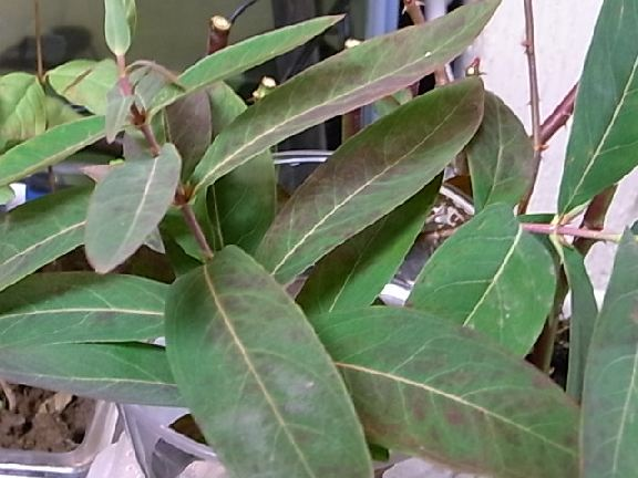 leaf120.jpg
