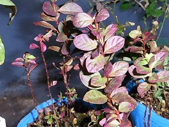 leaf131.jpg