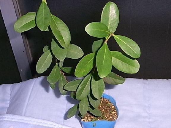 leaf133.jpg