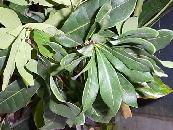 leaf138.jpg
