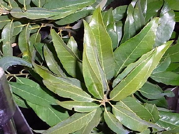 leaf140.jpg