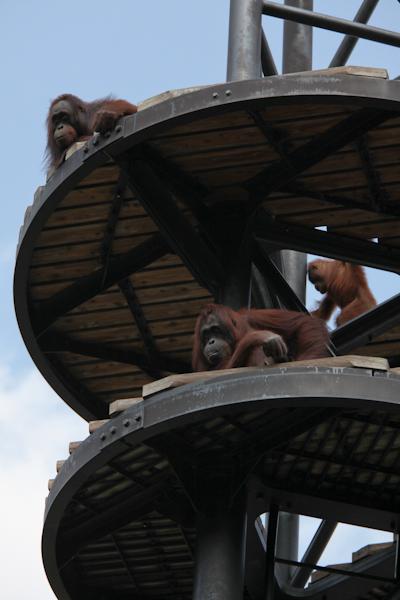 ボルネオオランウータン タワー