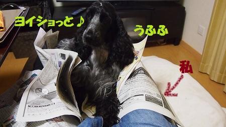 新聞読ませて