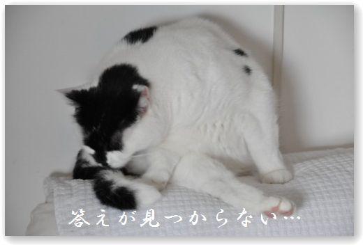 DSC_0647 (2) - コピー