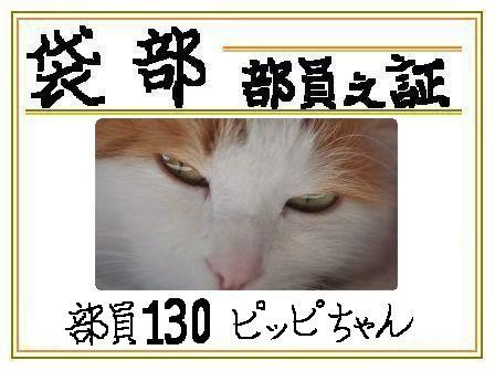 20110206214941a1a.jpg