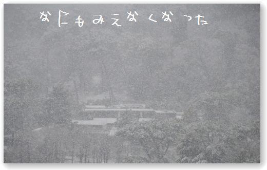 DSC_0445 (コピー)