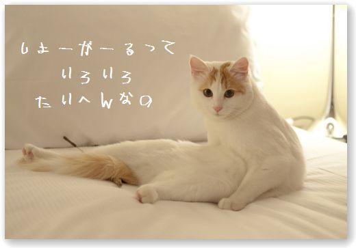 DSC_0594 (コピー)