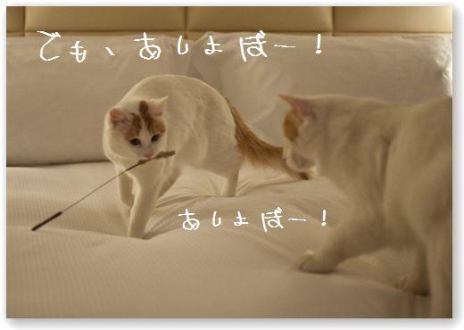 DSC_0582 (コピー)