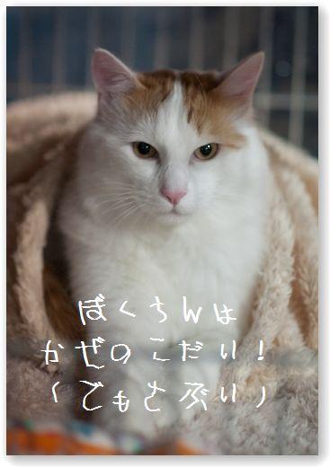 DSC_0567 (コピー)