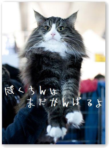 DSC_0639 (コピー)