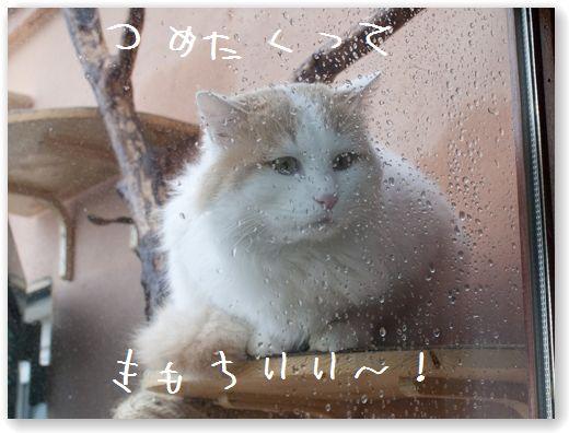 DSC_0375 (コピー)