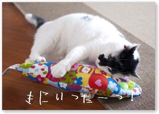 DSC_0873 (コピー)