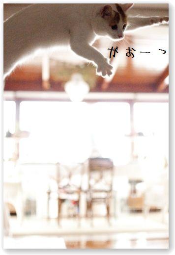 DSC_0848 (コピー)