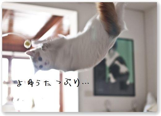DSC_0858 (コピー)