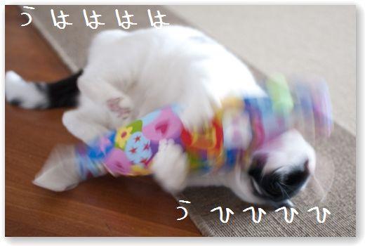 DSC_0874 (コピー)
