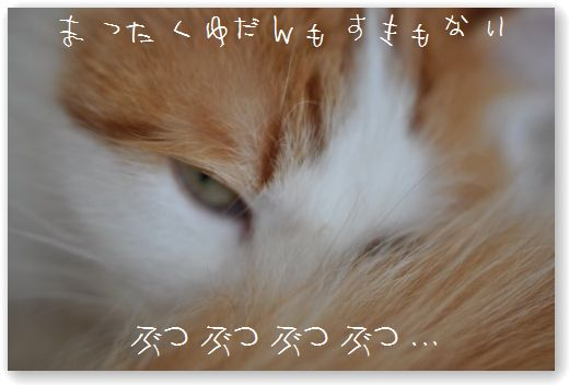 DSC_0049_20110104054648.jpg