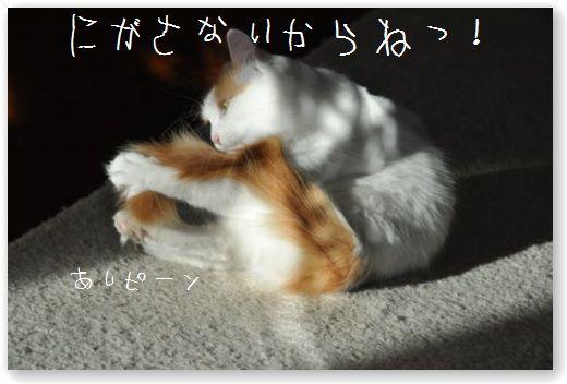 DSC_0057_20110113213839.jpg