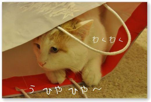 DSC_0061_20101224040026.jpg