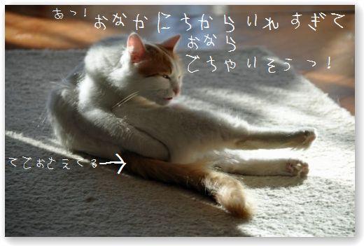 DSC_0067_20110113213838.jpg