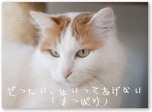 DSC_0071_20120221235928.jpg