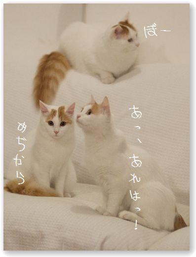 DSC_0090_20111230223901.jpg