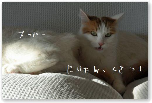 DSC_0093_20110113205216.jpg