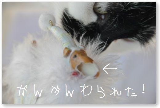 DSC_0117_20110113211743.jpg