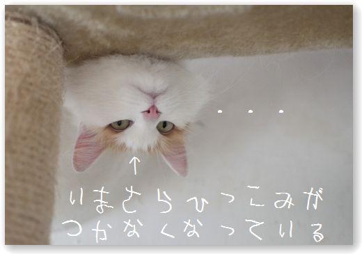 DSC_0220_20120103021626.jpg