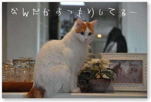 DSC_0246_20110120234736.jpg