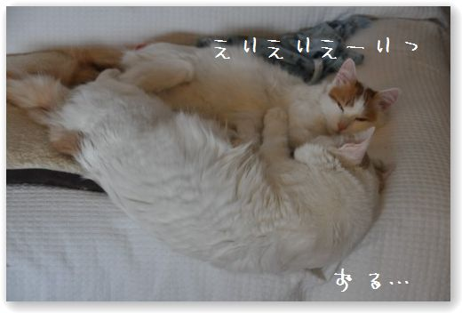 DSC_0321_20110122025500.jpg