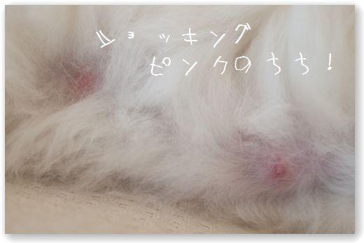 DSC_0332_20120128032254.jpg