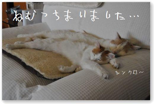 DSC_0344_20110122025531.jpg