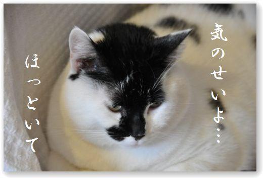 DSC_0355_20110122025531.jpg