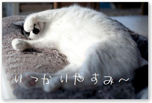 DSC_0356_20120128032255.jpg