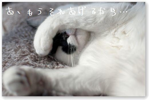 DSC_0359_20120222000741.jpg