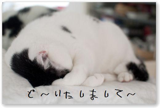 DSC_0364_20120215020126.jpg