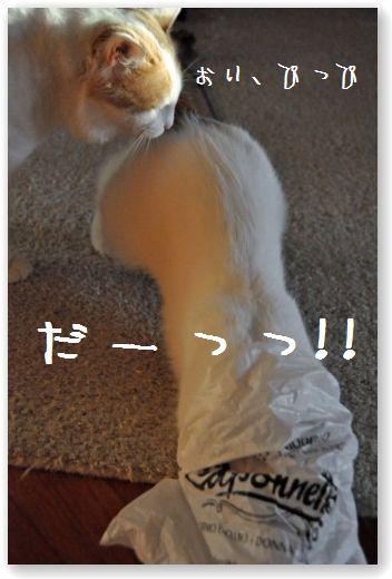 DSC_0418_20110128052455.jpg