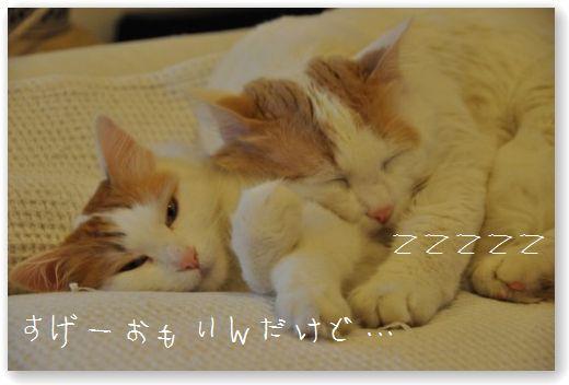 DSC_0520_20110102033538.jpg
