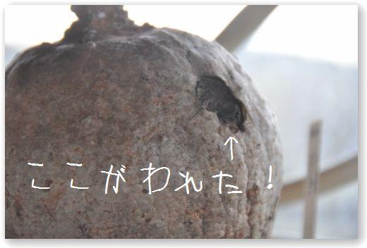 DSC_0617_20110127014415.jpg
