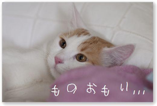 DSC_0940_20120103013248.jpg