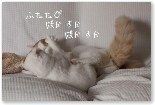 DSC_0946_20120112014651.jpg