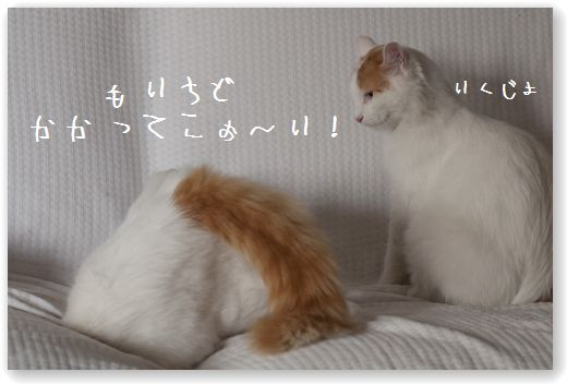 DSC_0947_20120112015110.jpg