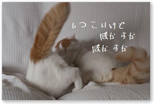 DSC_0953_20120112015110.jpg