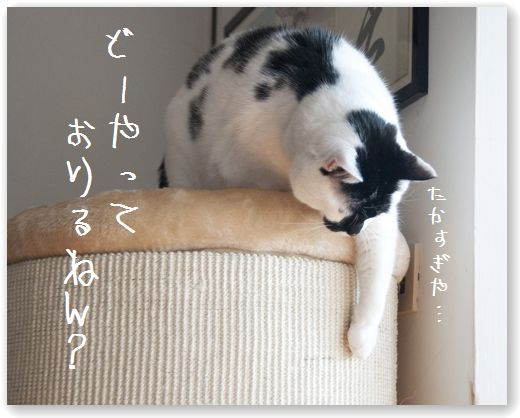 DSC_0953_20120215020708.jpg