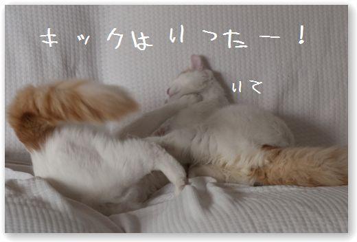 DSC_0954_20120112015110.jpg