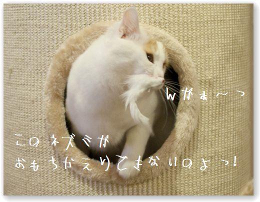 DSC_0965_20120222000741.jpg