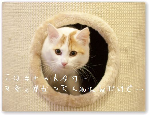DSC_0969_20120222000742.jpg