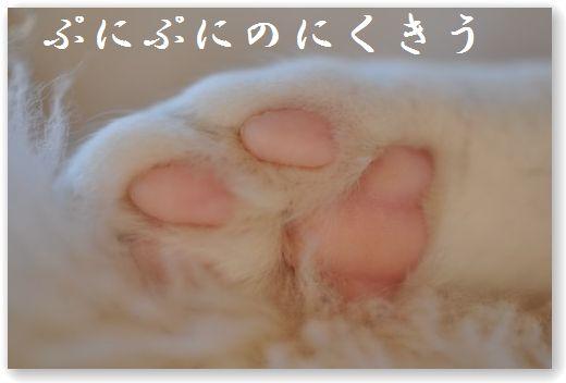 DSC_1211_20101222014012.jpg