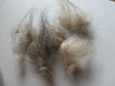 じゅりぃの毛